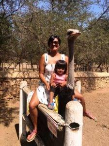 Ostrich Ride 225x300 - Ostrich Ride