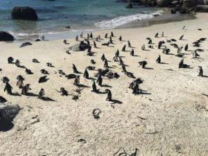 Penguin Colony 300x225 - Penguin Colony