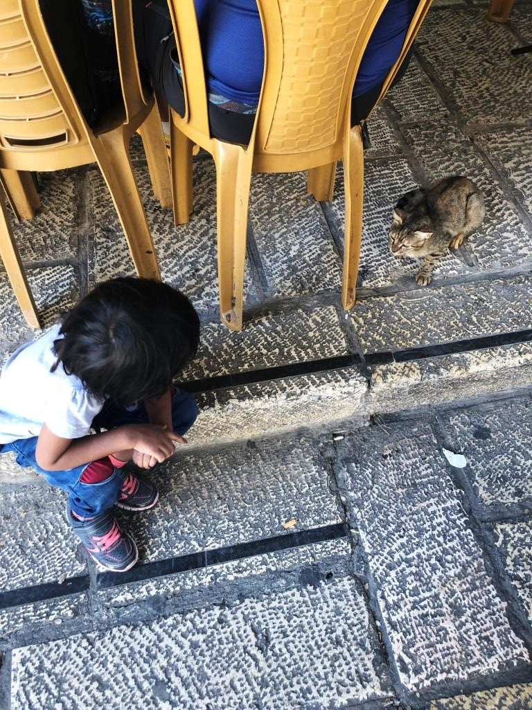 Jerusalem cat - Travelling to Israel Part-2 (Suggested Itinerary)
