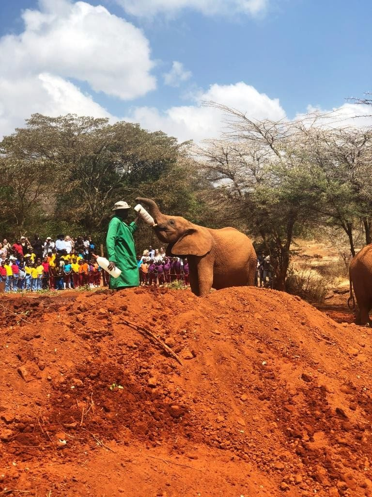 Kenya 15 768x1024 - Planning a trip to Kenya- Hakuna Matata ;)