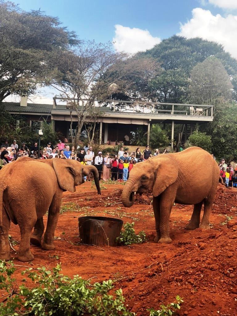 Kenya 16 1 768x1024 - Planning a trip to Kenya- Hakuna Matata ;)