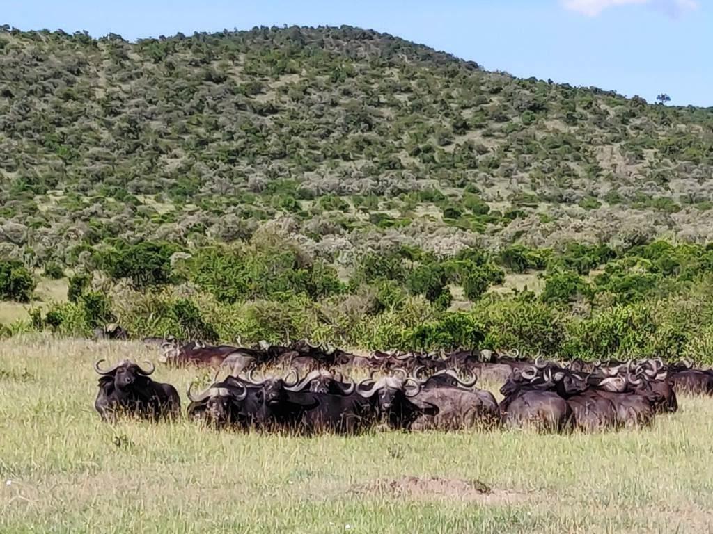 Kenya 28 1024x768 - Planning a trip to Kenya- Hakuna Matata ;)