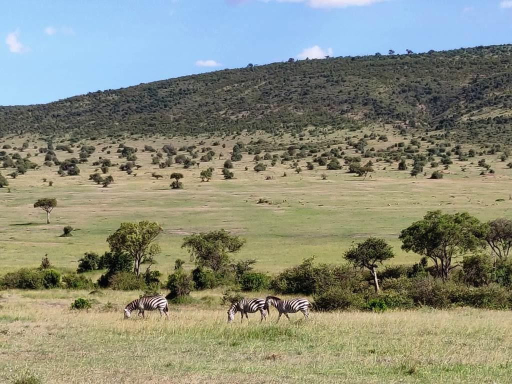 Kenya 30 1024x768 - Planning a trip to Kenya- Hakuna Matata ;)