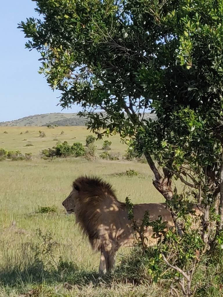 Kenya 35 768x1024 - Planning a trip to Kenya- Hakuna Matata ;)