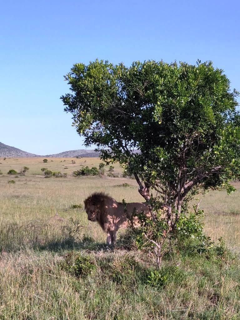Kenya 36 768x1024 - Planning a trip to Kenya- Hakuna Matata ;)