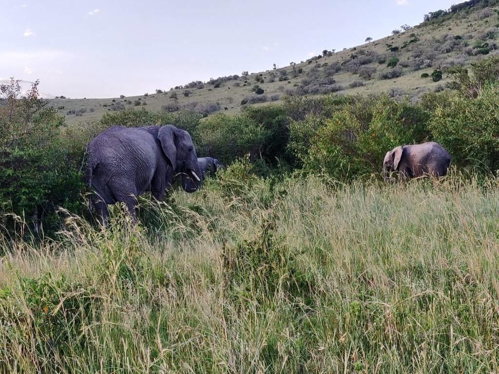 Kenya 37 1024x768 - Planning a trip to Kenya- Hakuna Matata ;)