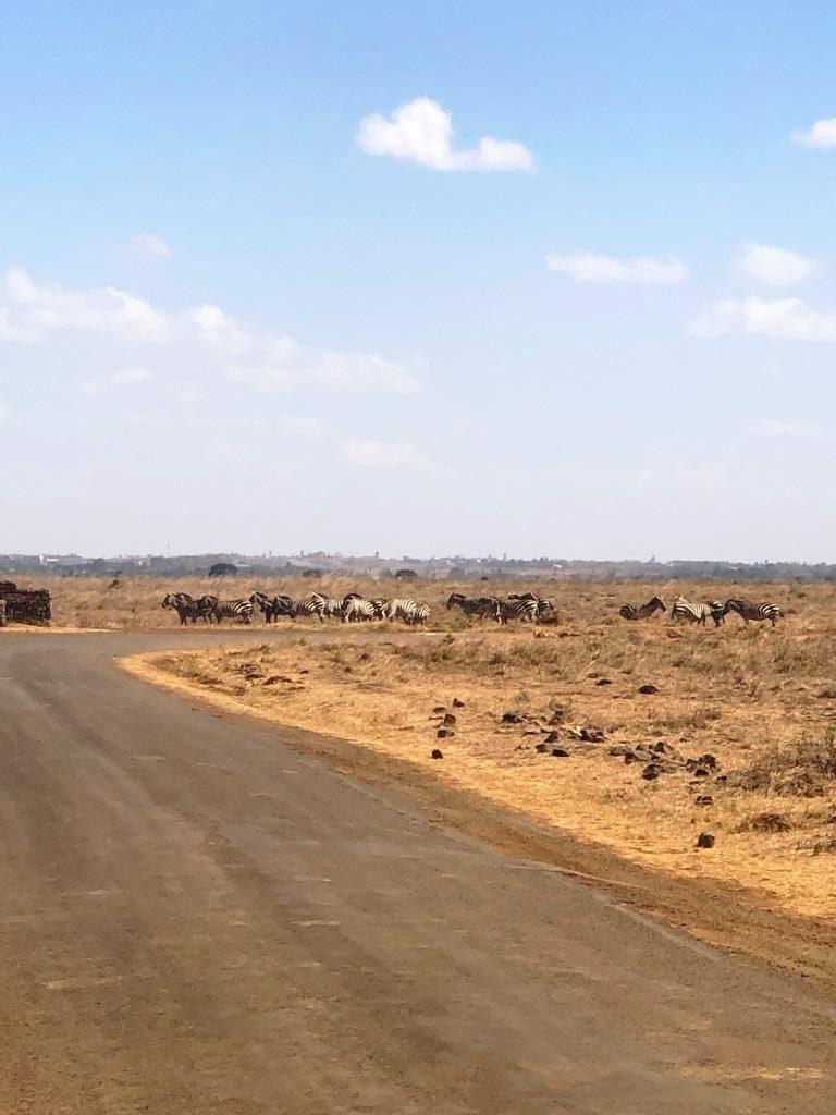 Kenya 4 768x1024 - Planning a trip to Kenya- Hakuna Matata ;)