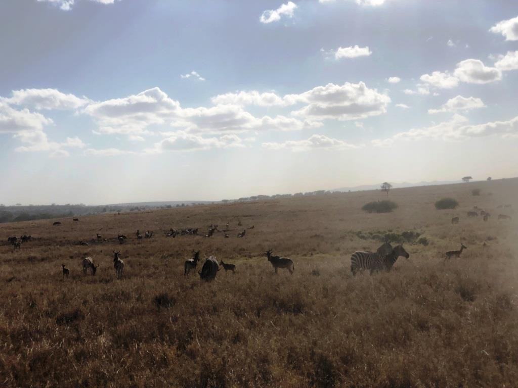 Kenya 7 1024x768 - Planning a trip to Kenya- Hakuna Matata ;)